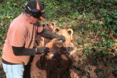 bears-08