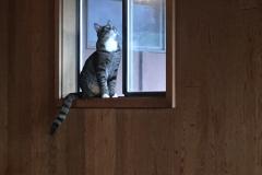 Ansel on the window sill