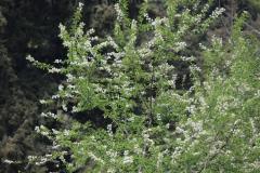 apple-in-bloom-01