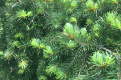 spring-green-01