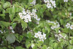 wildflowers-03
