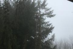 cedar-removal-19