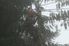 cedar-removal-20
