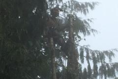 cedar-removal-22
