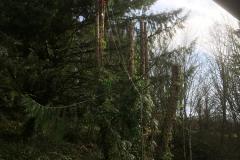 cedar-removal-46