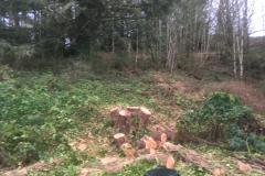 cedar-removal-56
