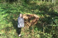 cedar-removal-65